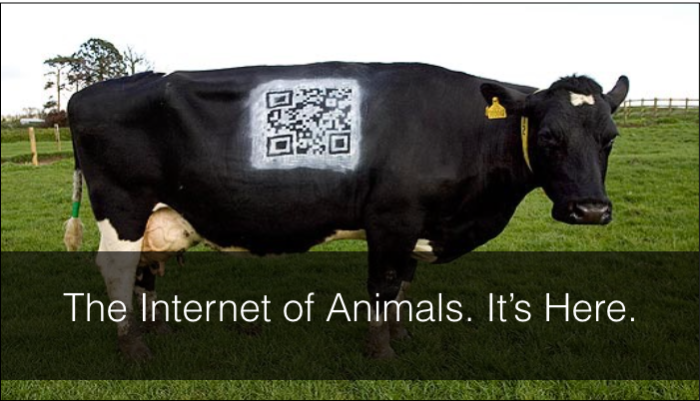 The Internet of Animals
